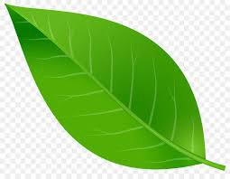 true green leaf png - Google Search