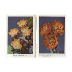 (21) Pinterest - Gorgeous Antique Oil Painting of yellow flowers, signed | ˗ˏˋ shoplook / polyvore