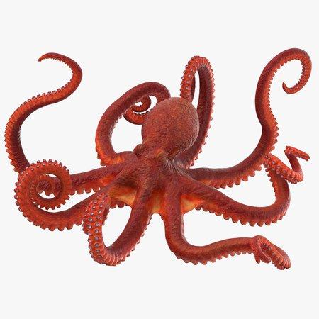 Octopus - Rigged