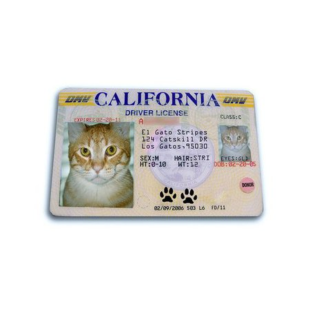 cat license