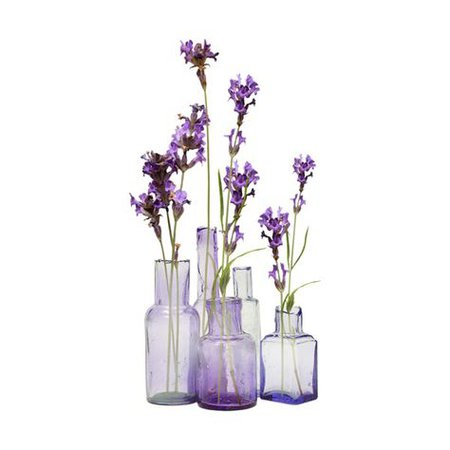 purple lavender filler png aesthetic flower mood