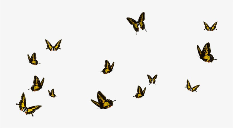 Flying Butterfly Png - Borboletas Png - Free Transparent PNG Download - PNGkey