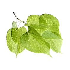 polyvore leaves filler green