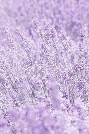 light purple spring aesthetic - Google Search