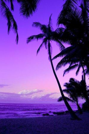 Pinterest purple beach