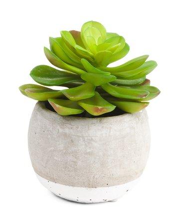 8.5in Faux Succulent In Pot - Living Room - T.J.Maxx