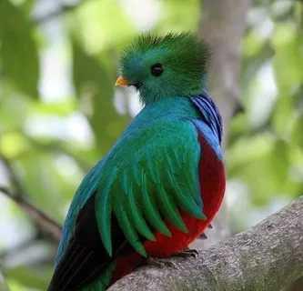 quetzal green: 10 тыс изображений найдено в Яндекс.Картинках