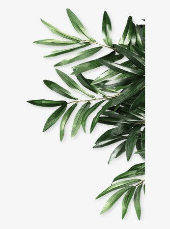 968-9688436_mq-green-leaf-leaves-border-borders-olive-leaves.png (820×1105)