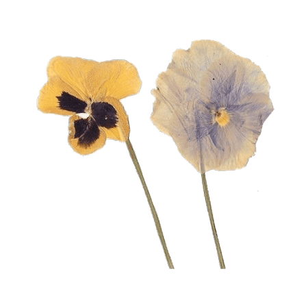 flower png cottagecore - Google Search