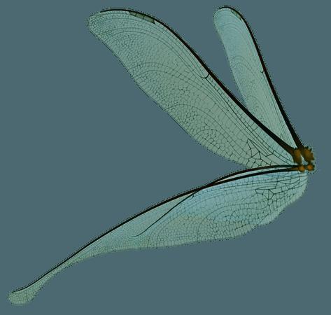Dragonfly Fairy Wings Render by frozenstocks on DeviantArt