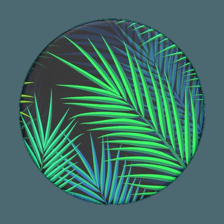 Midnight Palms PopSockets PopGrip
