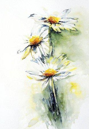 daisies - Google Search