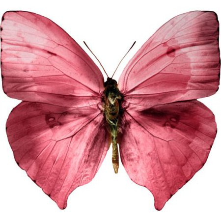 pink butterfly png filler