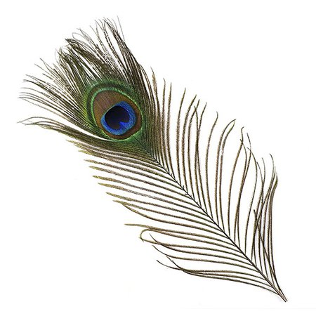 peacock feather png - Google Search