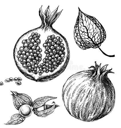 vintage pomegranate