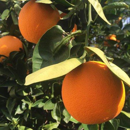 orange aesthetic garden tree