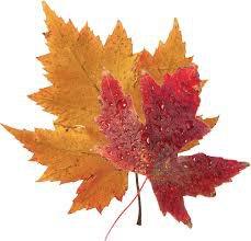 fall leaf - Google Search