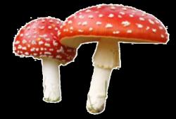 Red Mushroom pngs