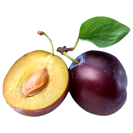 Plum-Background-White-Image.png (600×600)