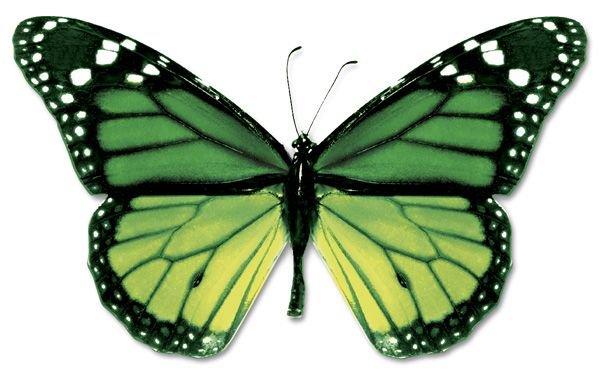 butterflies green - Google Search
